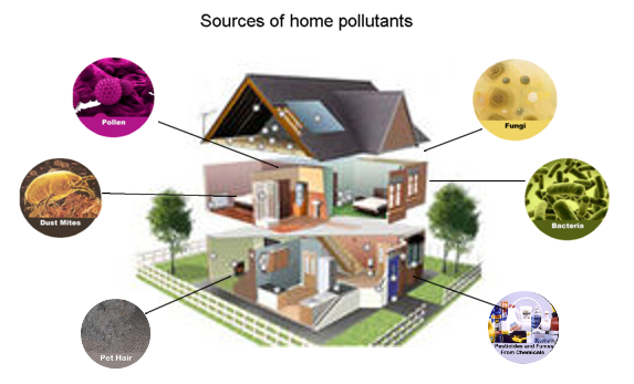 Sources of home pollutants - Dust mites,Pollen, fungai, bacteria, pet hair, Pesticides and fumes from chemicals, pet hair
